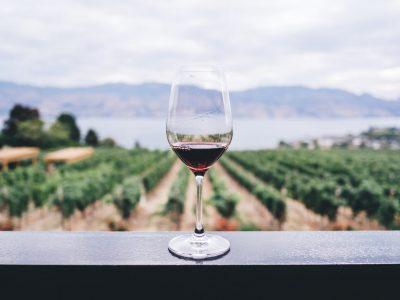 Domaine De Sainte Veziane: Wijnen en Gastronomie