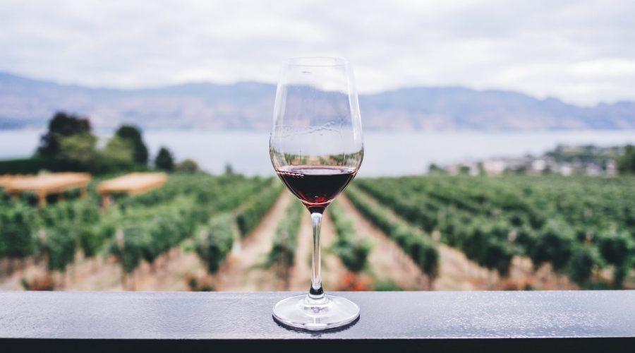 Domaine De Sainte Veziane : Vins Et Gastronomie