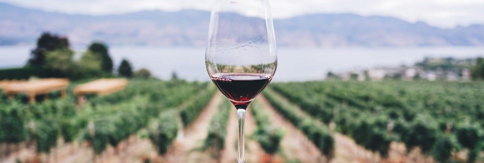 Domaine Sainte Véziane : Diaporama Vin Et Gastronomie
